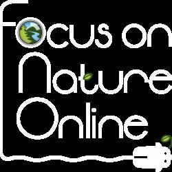 FON_Online_3lines_w